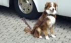 Linnepe Auffahrplatte Dog Sitter mit Hundehaken
